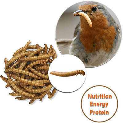 High Quality Meal Worms Protein Rich Treat For Garden Wild Birds 75 Grams Pack