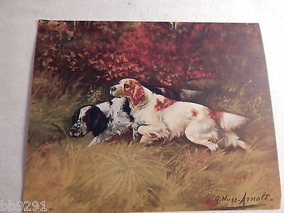 Vintage Litho USA G Muss Arnolt English Setter Dog Picture Miniature