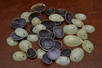 100 Pcs 2 Holes Ring Top Cowrie Sea Shell Beads Charms #T-430