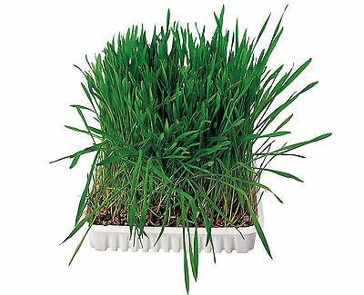 Grow your Own Small Animal Grass Hamster Guinea Pig Rabbit Food Cereal Seed 100g