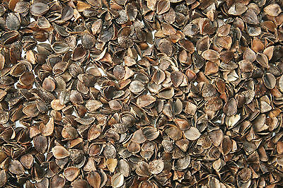 Buckwheat Hulls for pillow, cushion and craft filling - 1kg