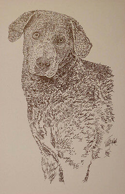 CHESAPEAKE BAY RETRIEVER DOG ART PRINT #37 Kline adds dogs name free.  CHESSIE