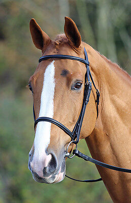 Shires Aviemore Raised Cavesson Bridle PONY COB OR FULL **BLACK OR BROWN**