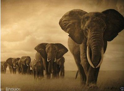 African animals elephant painting on canvas landscape No Frame