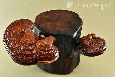 Natural Dry Mushroom Lingzhi Ganoderma Red Ironwood Decor Art Handmade OAK No1
