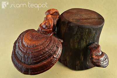 Natural Dry Mushroom Lingzhi Ganoderma Red Ironwood Decor Art Handmade OAK No2