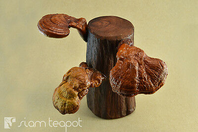 Natural Dry Mushroom Lingzhi Ganoderma Red Ironwood Decor Art Handmade OAK No4