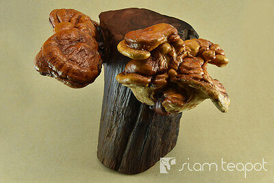 Natural Dry Mushroom Lingzhi Ganoderma Red Ironwood Decor Art Handmade OAK No8