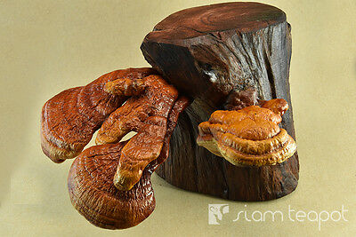Natural Dry Mushroom Lingzhi Ganoderma Red Ironwood Decor Art Handmade OAK No9