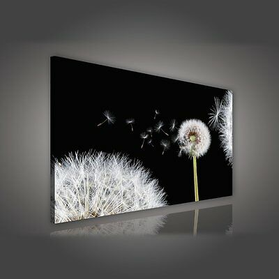 leinwandbild canvas wandbild fotoleinwand kunstdruck pflanzen blumen lila tulpen eur 1 00. Black Bedroom Furniture Sets. Home Design Ideas