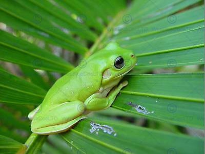 Nature Animal Frog Green Amphibian Leaf Poster Art Print Home Picture Bb1289B