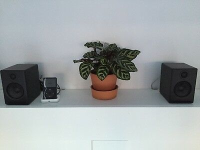 Audioengine A2+ powered speakers with D1 desktop stands