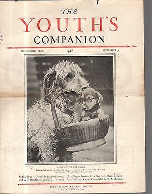 1926 Youth's Companion September 9 - Airedale Terrier and puppy cover