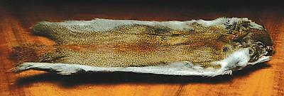 """Pine Squirrel Skin 