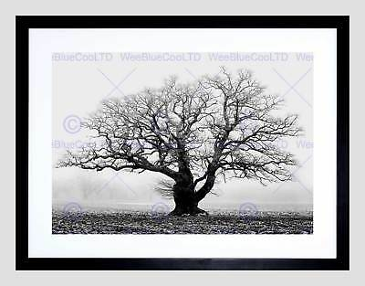 WINTER TREES FOG MIST SUNRISE SILHOUETTE ART PRINT POSTER PICTURE BMP1651B