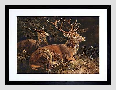 Painting Animal Group Portrait Schleich Red Deer Framed Art Print B12X12766