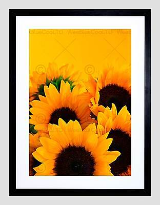 YELLOW SUNFLOWERS CLOSEUP BRIGHT PHOTO ART PRINT POSTER PICTURE BMP2368A