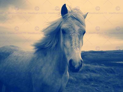 Animal Photo Painting White Horse 12 X 16 Inch Art Print Poster Picture Hp2101