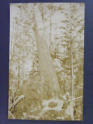 Man Cutting Chopping Down Tree Logging Antique Real Photo Postcard RPPC c1910