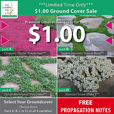 $1.00 Groundcover seed sale! Creeping thyme, Bonsai Moss, Dichondra & Alyssum!