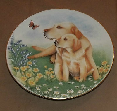Royal Worcester Labrador Collectors Plate