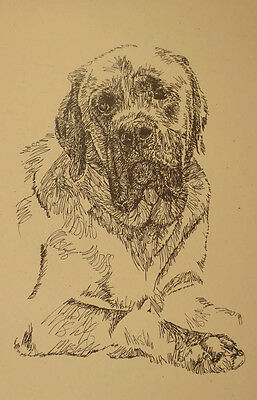 MASTIFF DOG ART PORTRAIT PRINT #40 Kline adds your dogs name free. GREAT GIFT
