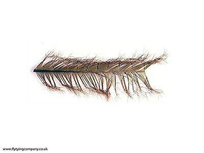 Knotted Cock Pheasant Tails   Multiple Colours Available