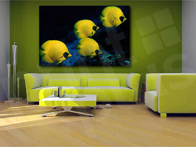 Yellow Butterfly Fish Discus Fishes Canvas Art Poster Print Wall Decor