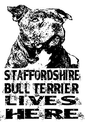 Staffordshire Bull Terrier Lives Here,Door / Window Sticker Sigh,Gift Dog Lover