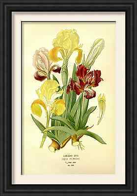 plants and flowers set of three Prints pictures framed ideal gift