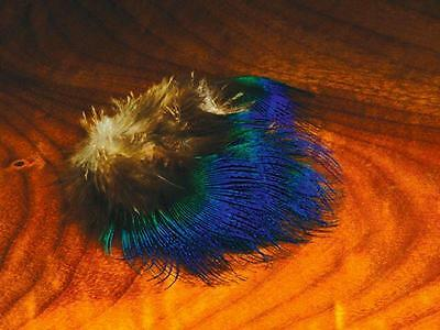 Blue Peacock Feathers | Fly Tying Materials