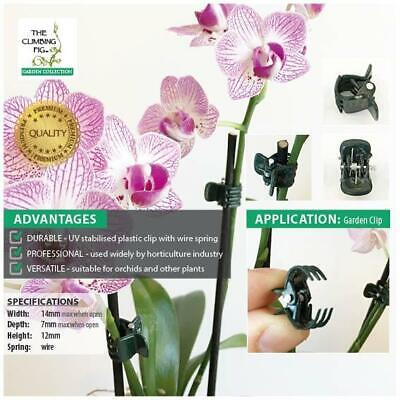 Small Orchid Plant Clips | Dark green plastic | Stake Phalaenopsis & Dendrobium.