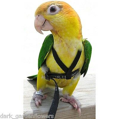 Aviator Parrot Harness and Leash Cockatiel to Macaw Just Choose Size