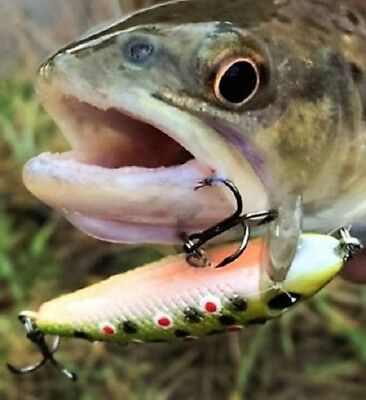 2 Awesome 5.5 cm Trout Lures Flathead Bass Redfin Perch  Trout Cod Bream Salmon