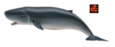 PYGMY SPERM WHALE SEALIFE MODEL by COLLECTA 88653 *BRAND NEW*