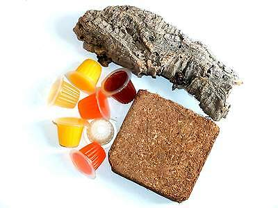 Insect Jelly Pots - Fruit Beetle Pack Including 10 Jellies ,Corkbark & Coir