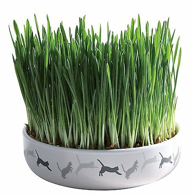 "Ceramic Bowl with Grow your Own Cat Grass 50g Seed 15cm(6"") Bowl"