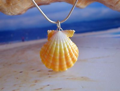 Yellow Hawaiian Sunrise Shell (Pecten Langfordi) on White Pearl & Silver Chain