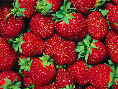 Strawberries x 50 ml fragrance oil for candles melts soap burners