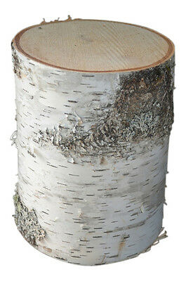 "Birch Tree Stump Large display rustic bark store Stump trunk 8"" to 12"" d x 6"" H"