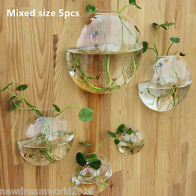 A Set of 5 Bubble Glass Terrariums,Wall Bubble Bowl Planters,Wall Fish Tank