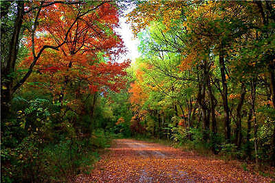 Road to Forest Autumn Landscape 3D Full Wall Mural Photo Wallpaper Printed Decal