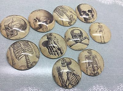 25mm Round Anatomy Skeleton Bones Cabochons for jewellery,charms, crafts x10