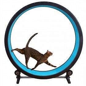 One Fast Cat Exercise Wheel!  Next shipment due in 30th December