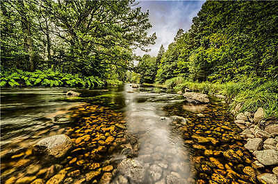 River Stone Forest Landscape 3D Full Wall Mural Photo Wallpaper Print Home Decal