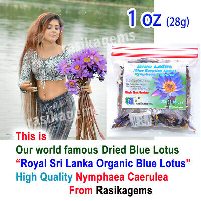 Dried Ceylon Blue Lotus Flowers Sacred Lily Nymphaea Caerulea very fresh Organic