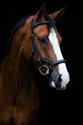 Horseware Rambo MICKLEM DELUXE Competition Bridle Black/Brown *ENGLISH LEATHER*