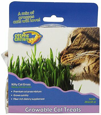 Cosmic Kitty Cat Grass Simply Add Water For Fresh Green Roughage Indoor Cats