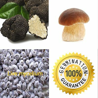 100% LIVE Lot 30g x 2 Truffle Boletus Mycelium Seeds Fungus Spawn Kit Book PDF