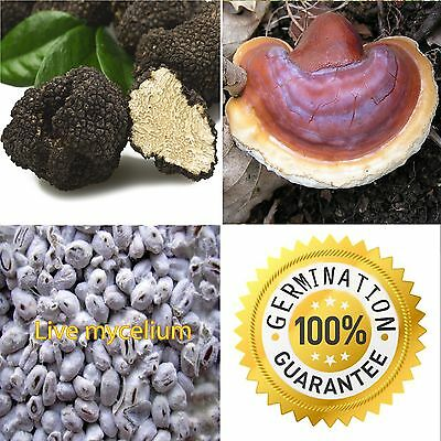 100% LIVE Lot 30g x 2 Truffle Reishi Mycelium Seeds Fungus Spawn Kit Book PDF